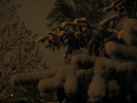 First snow tree at night